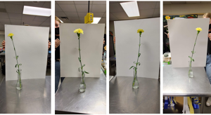 floriculture judging